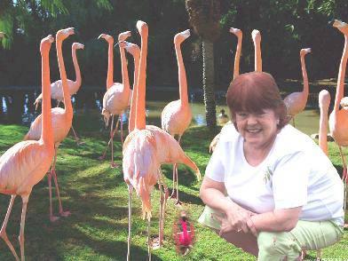 sue-flamingos