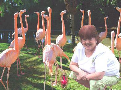 sue-flamingos