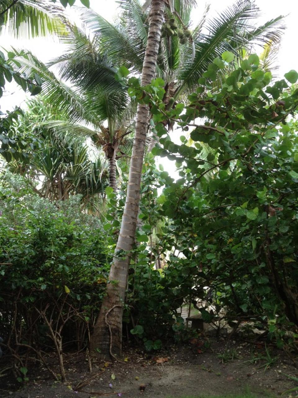 sues-garden