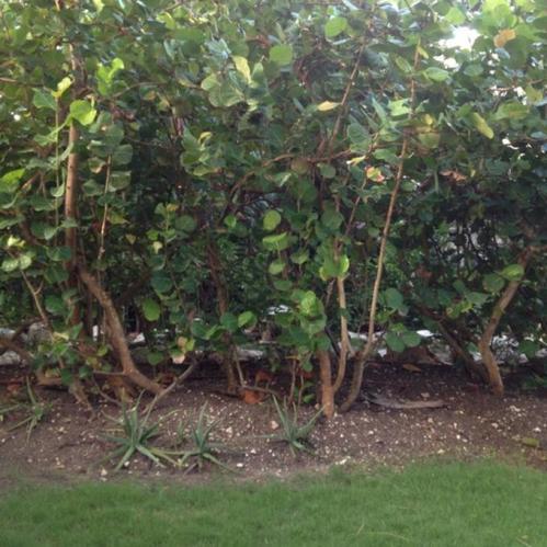 sues-garden2